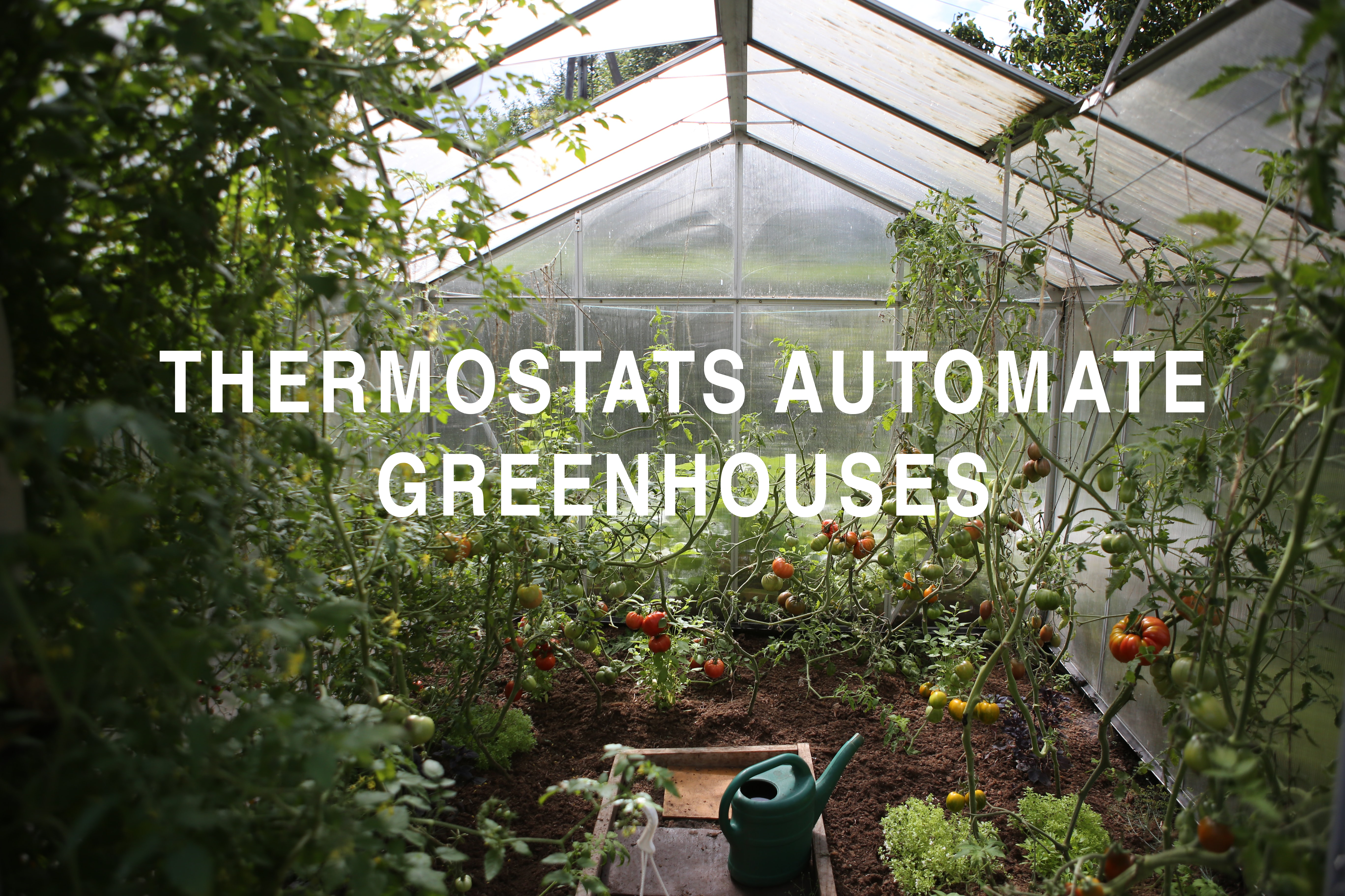Thermostats Automate Greenhouses